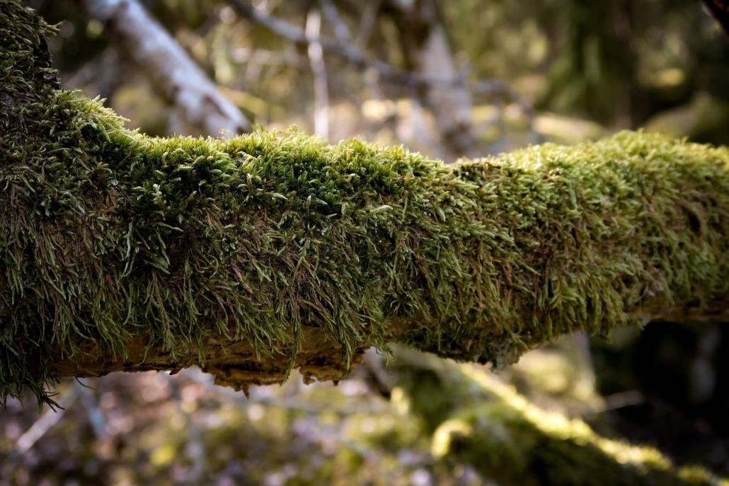 Auszeit im Wald Naturcoaching